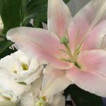 5月27日 「神の贈り物」 佐藤和宏牧師